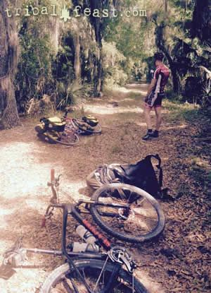Encountering an alligator on the road while bikepacking in Myakka River State Park.