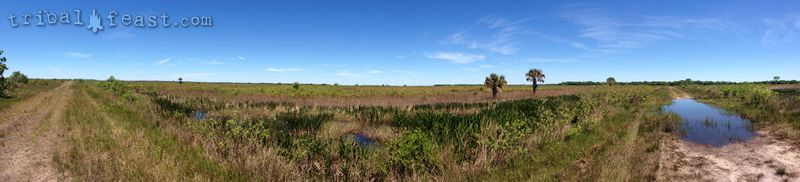 Panorama of the backcountry of Myakka River State Park.