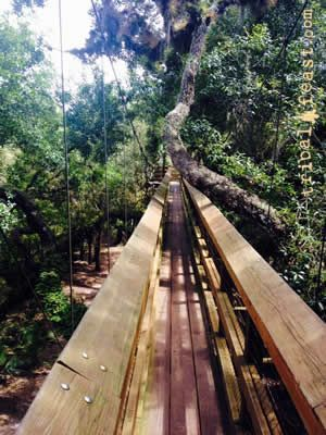 The canopy walkway at Myakka River State Park.